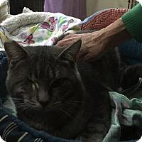 Adopt A Pet :: Popeye - Kelso/Longview, WA