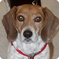 Adopt A Pet :: Lilly COURTETSY POST - Chesterfield, MI