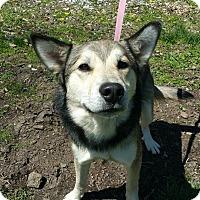 Adopt A Pet :: Bernard - Marion, IN