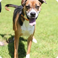 Adopt A Pet :: Louie - Little Rock, AR