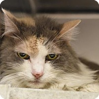 Adopt A Pet :: Robyn (foster care) - Philadelphia, PA