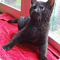 Adopt A Pet :: Serpico - N. Billerica, MA