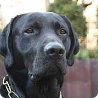 Adopt A Pet :: SHADOW - Gustine, CA