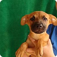 Adopt A Pet :: Spinner - Oviedo, FL