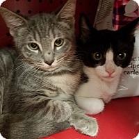Adopt A Pet :: Boys 1 - Pasadena, CA