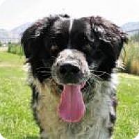 Adopt A Pet :: Oliver *Pending* - Logan, UT
