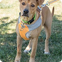 Adopt A Pet :: Hazel Blair - Atlanta, GA