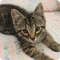 Adopt A Pet :: Sterling - Naperville, IL