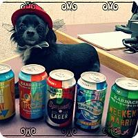 Adopt A Pet :: Ariana - El Paso, TX