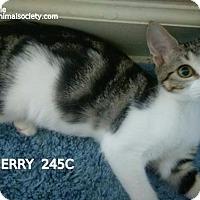 Adopt A Pet :: Jerry - Spring, TX