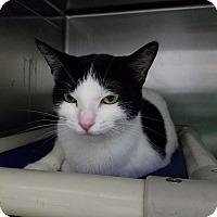 Adopt A Pet :: Mira - Elyria, OH