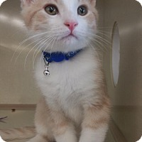 Adopt A Pet :: Buttercup - Walnut Creek, CA