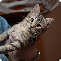 Adopt A Pet :: Autumn - Wichita, KS