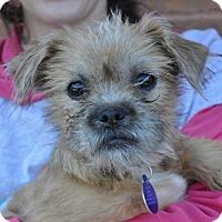 Adopt A Pet :: Mia - Atlanta, GA