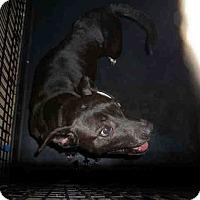Adopt A Pet :: Jessie - Newnan City, GA