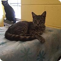 Adopt A Pet :: Kristoff - Bishopville, SC