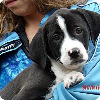 Adopt A Pet :: Takoda (11 lb) Video! - Sussex, NJ