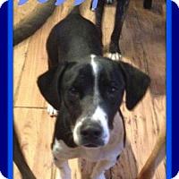 Adopt A Pet :: BOBBY - Sebec, ME