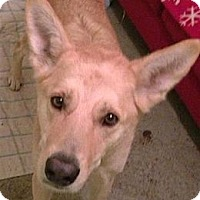 German Shepherd Dog Mix Dog for adoption in BC Wide, British Columbia - Parker