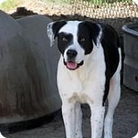 Adopt A Pet :: Jones - Quinlan, TX