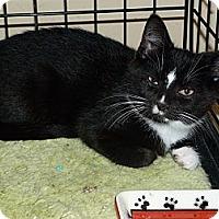 Adopt A Pet :: Tuxie - Stafford, VA