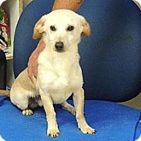 Adopt A Pet :: snoopy - Nanuet, NY