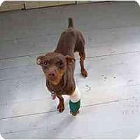 Adopt A Pet :: HARLEY - Springvale, ME