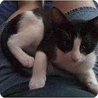 Adopt A Pet :: Samuel - Davis, CA