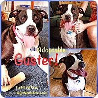 Adopt A Pet :: Guster - Naples, FL