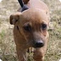 Adopt A Pet :: Juliet - Staunton, VA