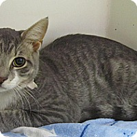 Adopt A Pet :: Brighton - Seminole, FL
