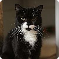 Adopt A Pet :: KayDee - Port Clinton, OH