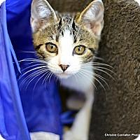 Adopt A Pet :: Margo - Island Park, NY