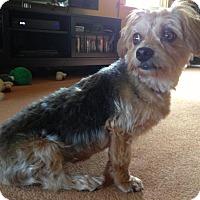 Adopt A Pet :: Duncan - Sinking Spring, PA