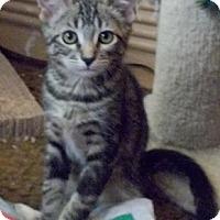 Adopt A Pet :: Hazard - North Highlands, CA