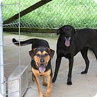 Adopt A Pet :: Sissy-pending adoption - East Hartford, CT