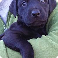Adopt A Pet :: Frasier - Kimberton, PA