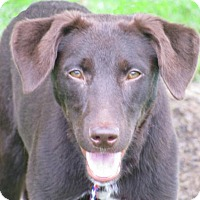 Adopt A Pet :: Sammy - Foster Care - Oxford, MS