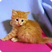Adopt A Pet :: Peela - Bentonville, AR