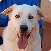 Retriever (Unknown Type)/Shepherd (Unknown Type) Mix Puppy for adoption in Las Vegas, Nevada - Shakespeare