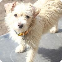 Adopt A Pet :: Bones - MEET ME - Norwalk, CT