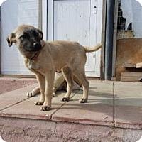 Adopt A Pet :: Arena - Brooklyn, NY