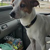 Adopt A Pet :: Arby - Hillside, IL