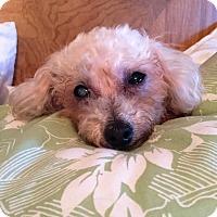Adopt A Pet :: Allie - Ft. Lauderdale, FL