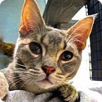 Adopt A Pet :: Grayson - Davis, CA