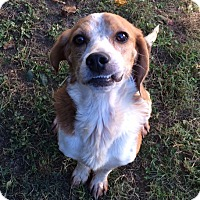 Adopt A Pet :: Rusty - Dumfries, VA