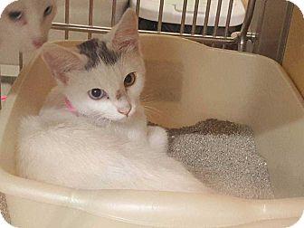 Domestic Shorthair Cat for adoption in Acworth, Georgia - Joleen