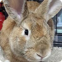 Adopt A Pet :: Forrest - Williston, FL