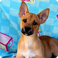 Adopt A Pet :: Mello Yellow - Los Angeles, CA