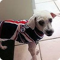 Adopt A Pet :: Dixon - Richardson, TX